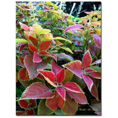 24 in. x 32 in. Magical Garden I Canvas Art