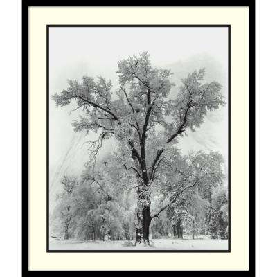 27 in. W x 32 in. H 'Oak Tree, Snowstorm, Yosemite National Park-1948' by Ansel Adams Printed Framed Wall Art