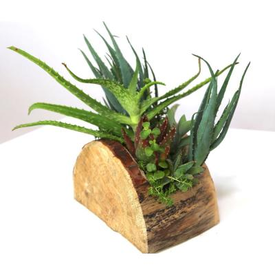 """12"""" Hand CarvedReclaimed Wood Centerpiece, Archway Cut with Assorted LiveSucculents - Sophia Grace"""