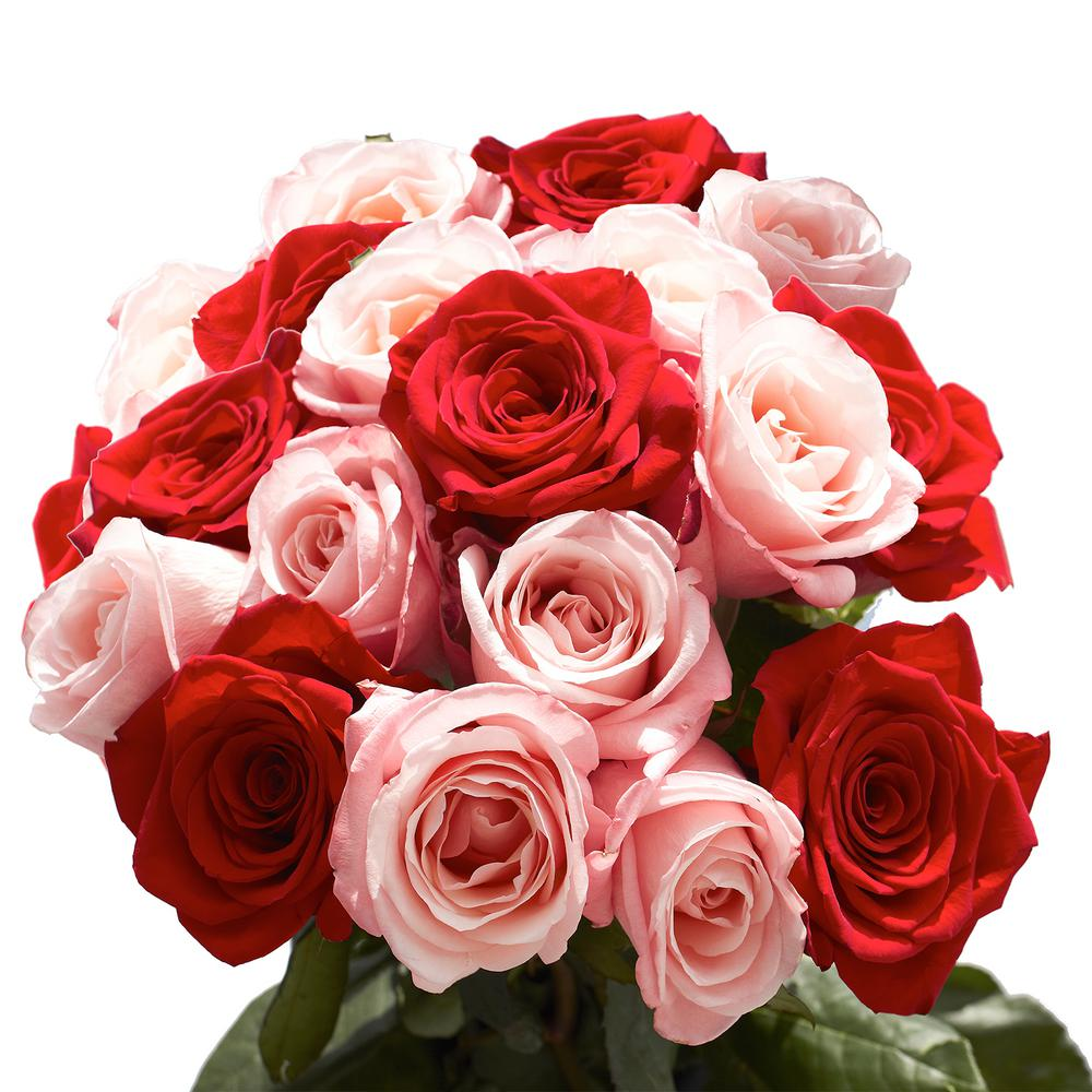 50 Stems of Roses 25 Red and 25 Pink