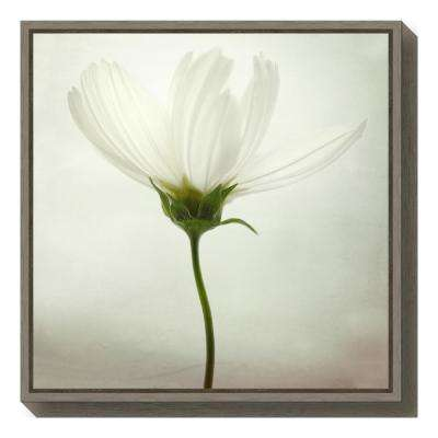 """""""White cosmos"""" by Lotte Gronkjaer Framed Canvas Wall Art"""