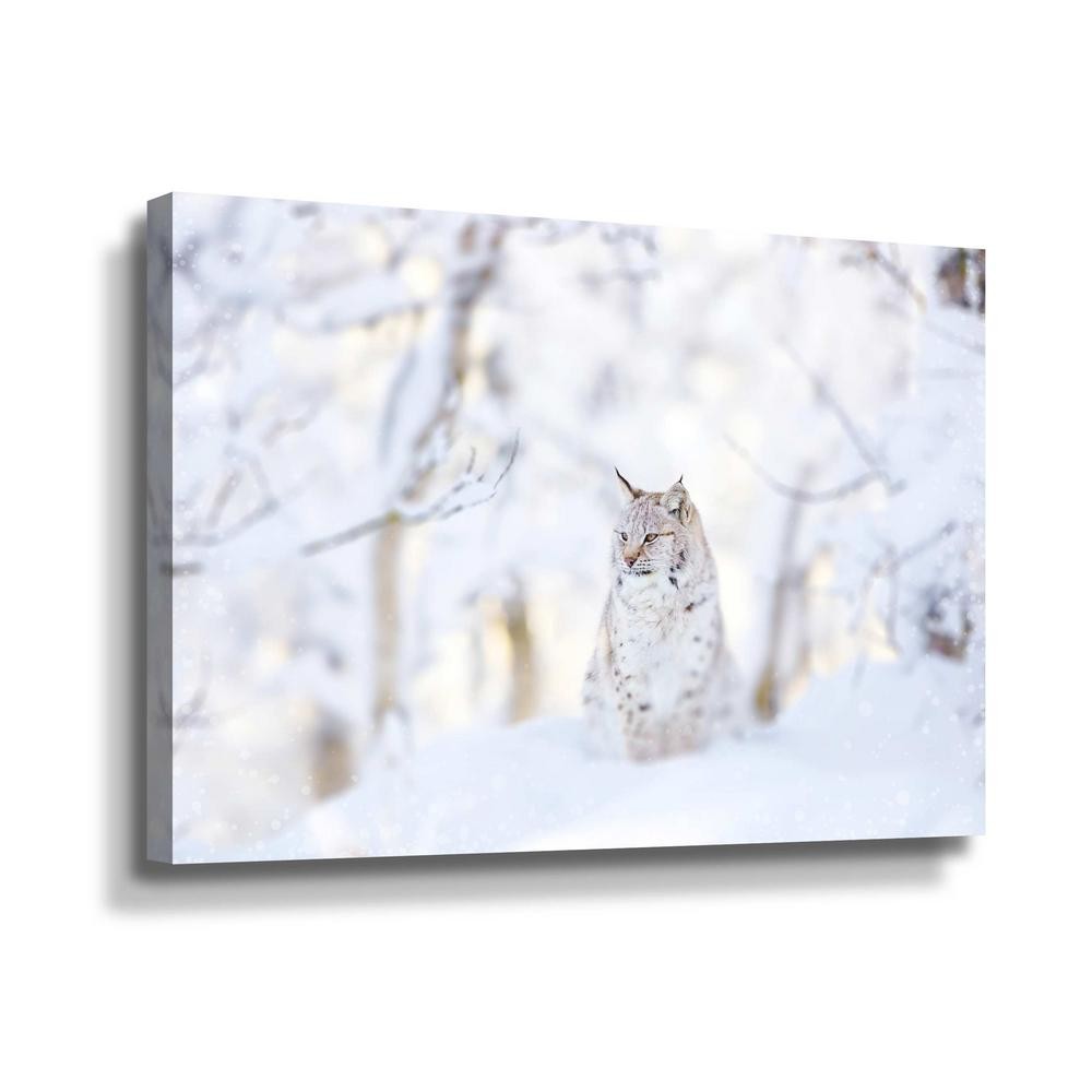 ArtWall Snow Lynx' by PhotoINC Studio Canvas Wall Art, White This beautiful gallery wrapped canvas art is the perfect piece of wall decor for that bare wall. Display this gorgeous wall art decor in the living area with some brushed nickel sconces. Hang this artwork in the dining area for a wonderful conversation piece. Color: White.