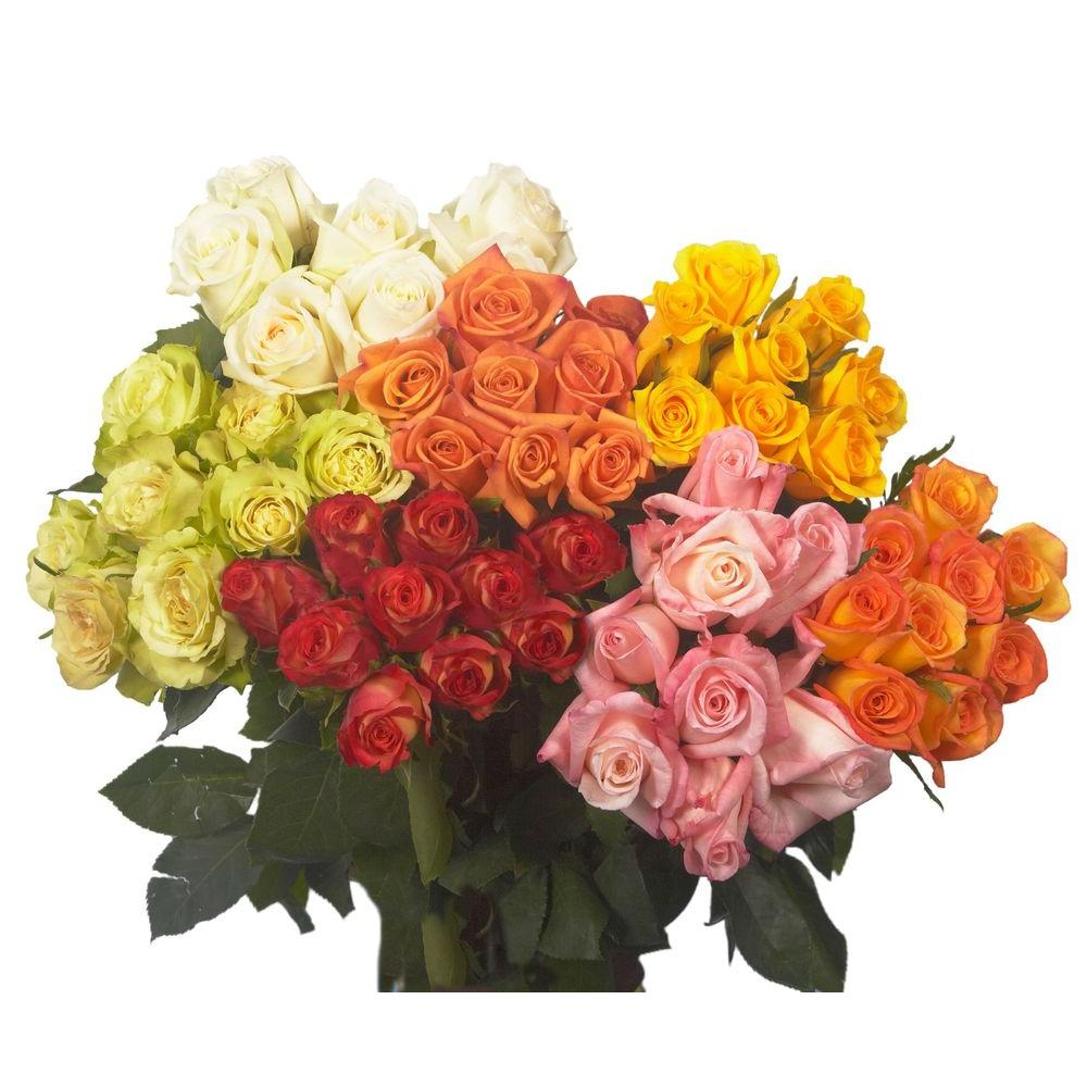 Globalrose Fresh Assorted Color Valentine's Day Roses (50 Stems)