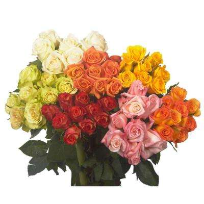 Fresh Assorted Color Valentine's Day Roses (50 Stems)