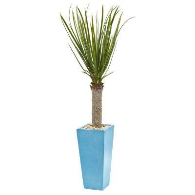 4 ft. High Indoor Yucca Artificial Tree in Turquoise Planter
