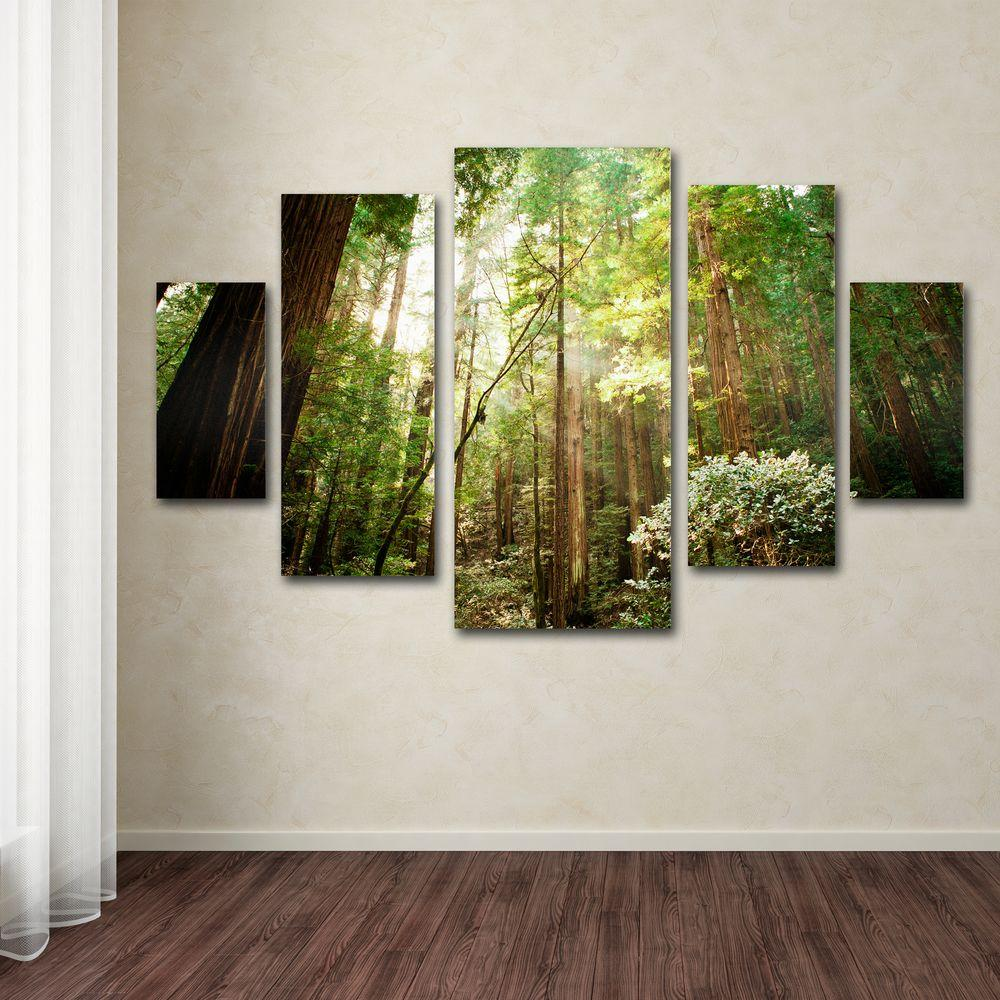Trademark Fine Art Muir Woods By Ariane Moshayedi 5 Panel Wall Set