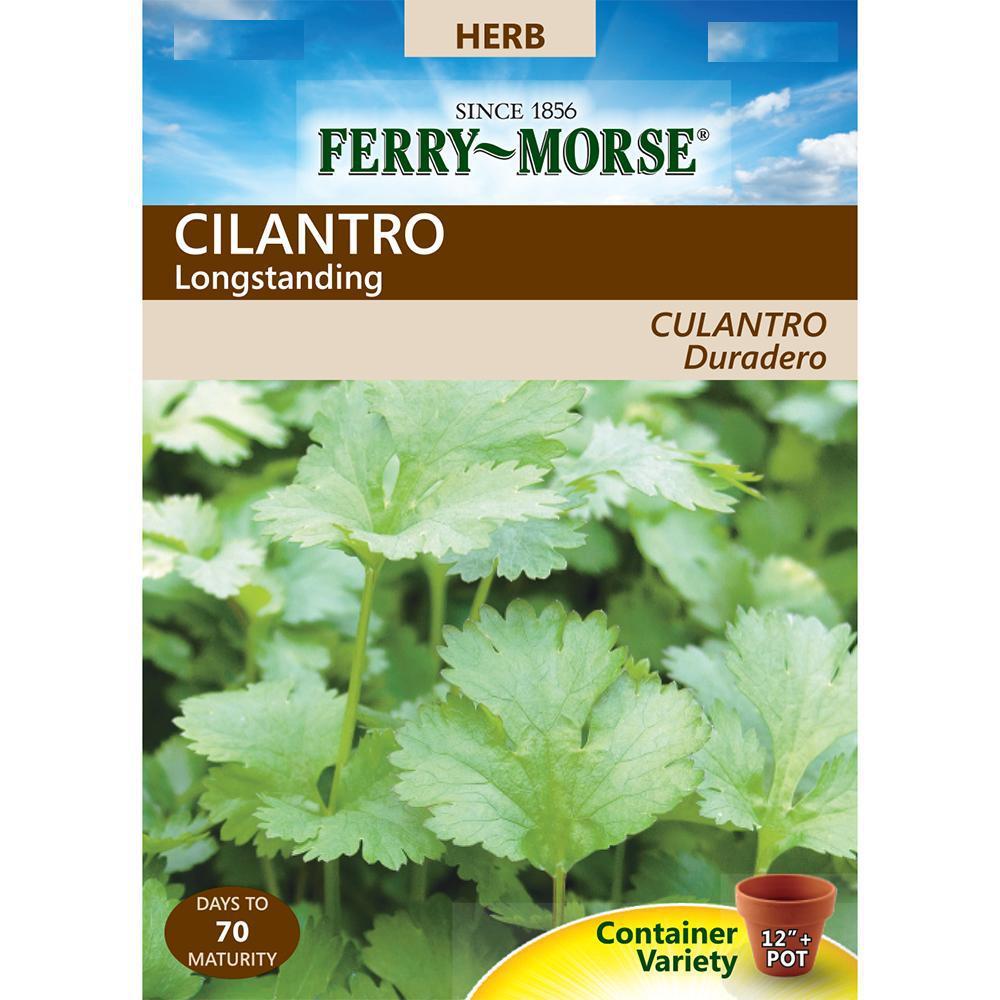Cilantro Longstanding Seed