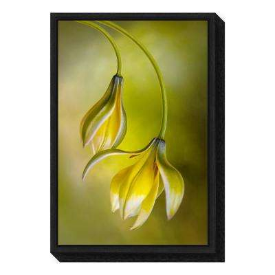 """Tulipa"" by Mandy Disher Framed Canvas Wall Art"
