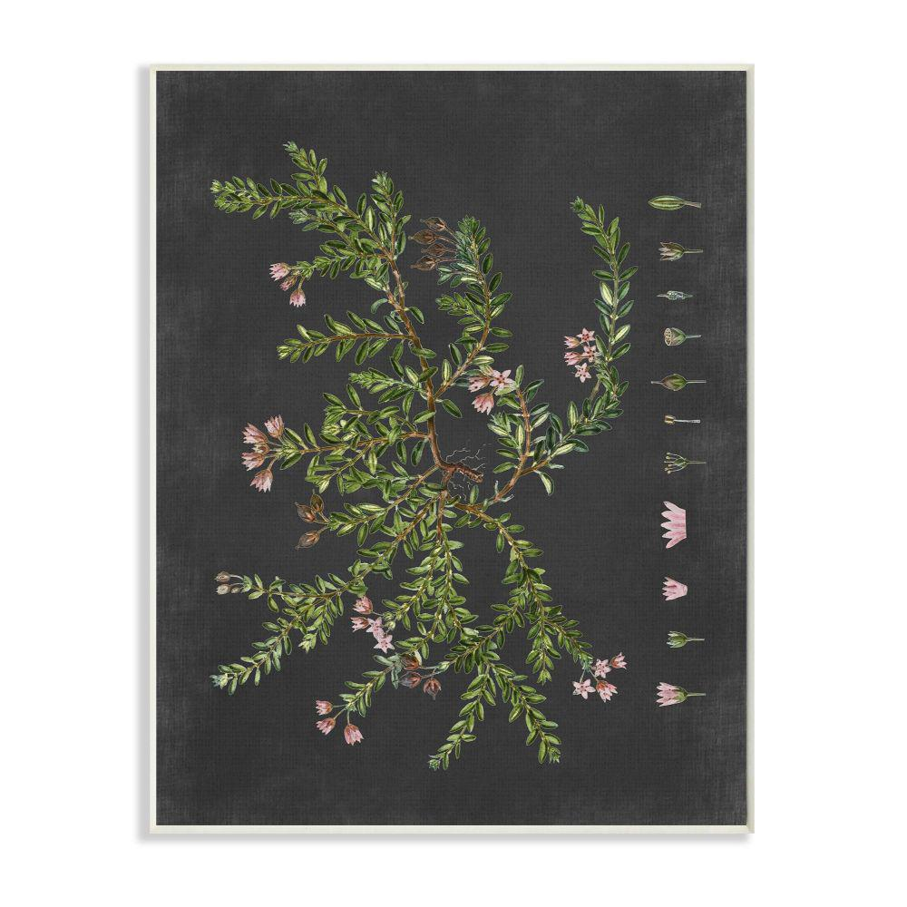 Stupell Industries Botanical Drawing Flower Pink On Black Design By Lettered And Linedwood Wall Art 19 In X 13 In Fap 161 Wd 13x19 The Home Depot