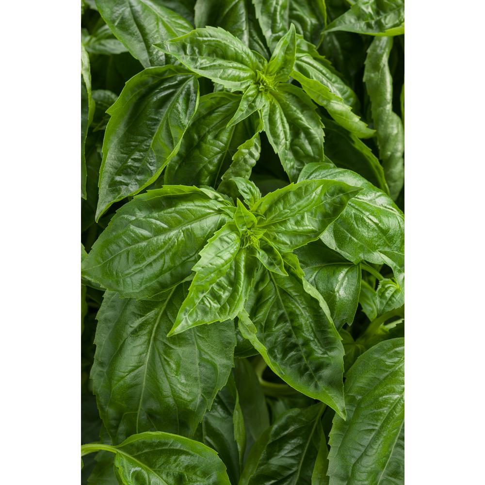 Herb Plants - Edible Garden - The Home Depot
