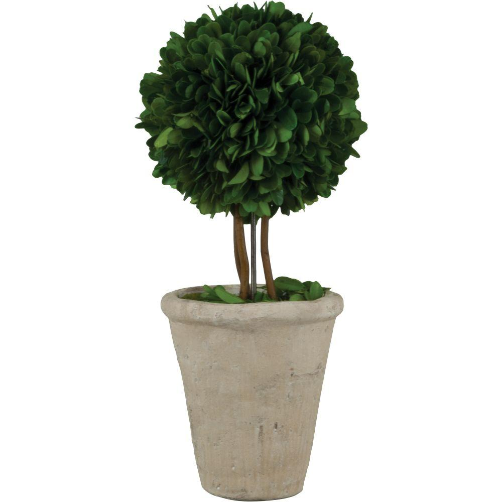 Pride Garden Products 4.25 in. W x 13 in. H Preserved Boxwood Ball Topiary in White Terracotta Pot