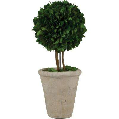 4.25 in. W x 13 in. H Preserved Boxwood Ball Topiary in White Terracotta Pot
