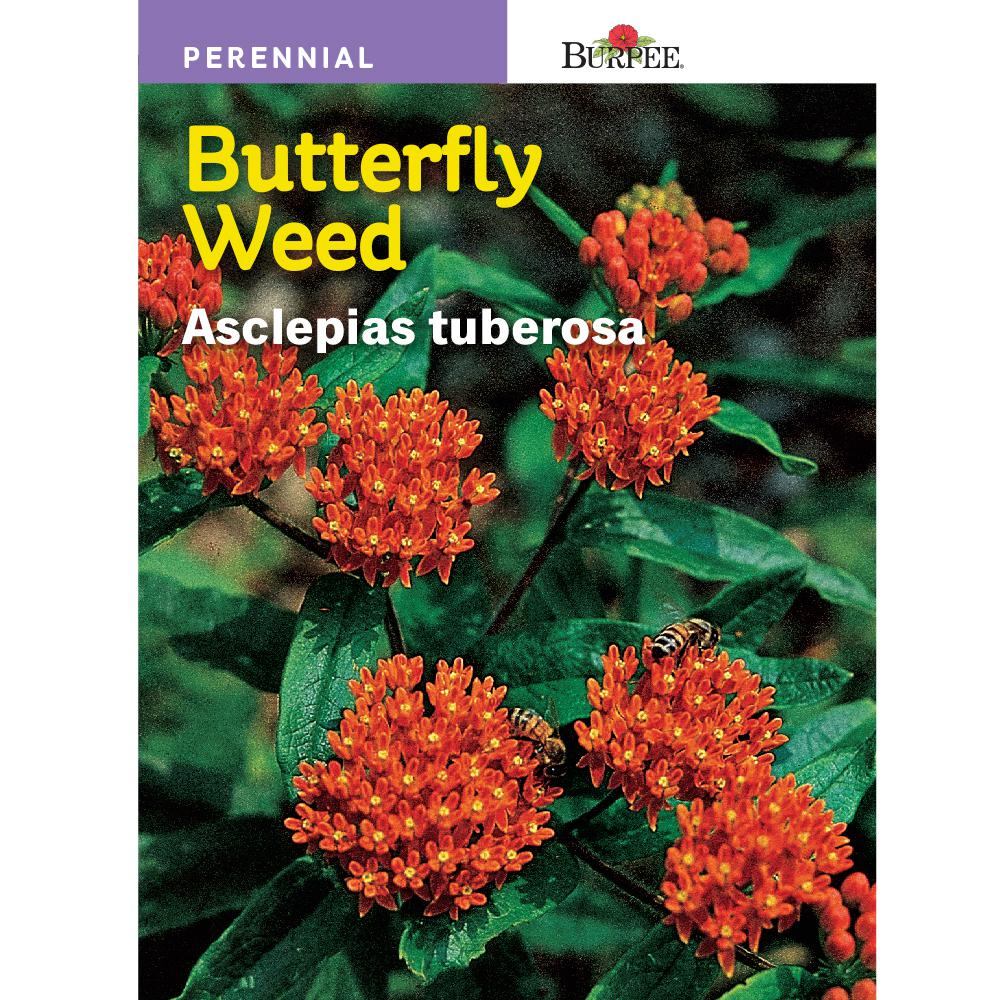 Burpee Butterfly Weed Asclepias Seed