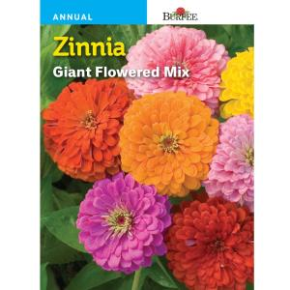 Bur Zinnia Giant Flowered Mix Seed 44602 The Home Depot