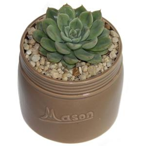 Costa Farms Echeveria Succulent in 4.5 inch Mason Jar Tan by Costa Farms