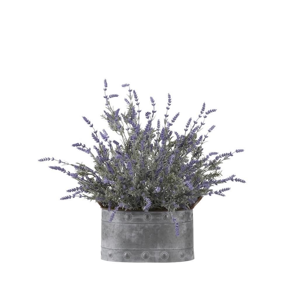 Indoor Lavender in Oval Metal Planter
