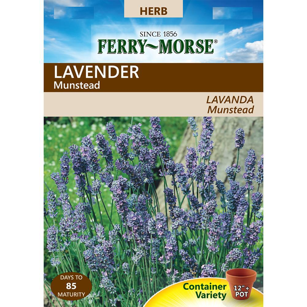 Ferry-Morse Lavender Dwarf Munstead Seed