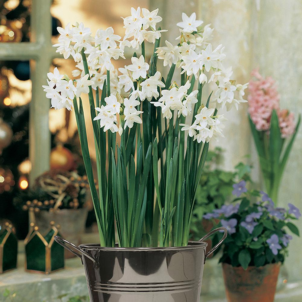 Paperwhite flower bulbs garden plants flowers the home depot paperwhite kit bulbs with artisan decorative planter mightylinksfo Images