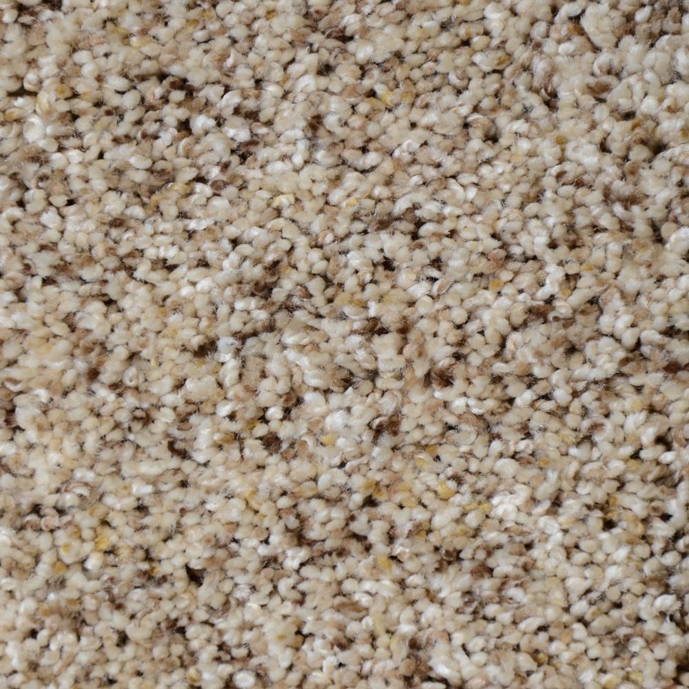 Carpet Sample - Nevada - Color Alta Sierra Texture 8 in. x 8 in.