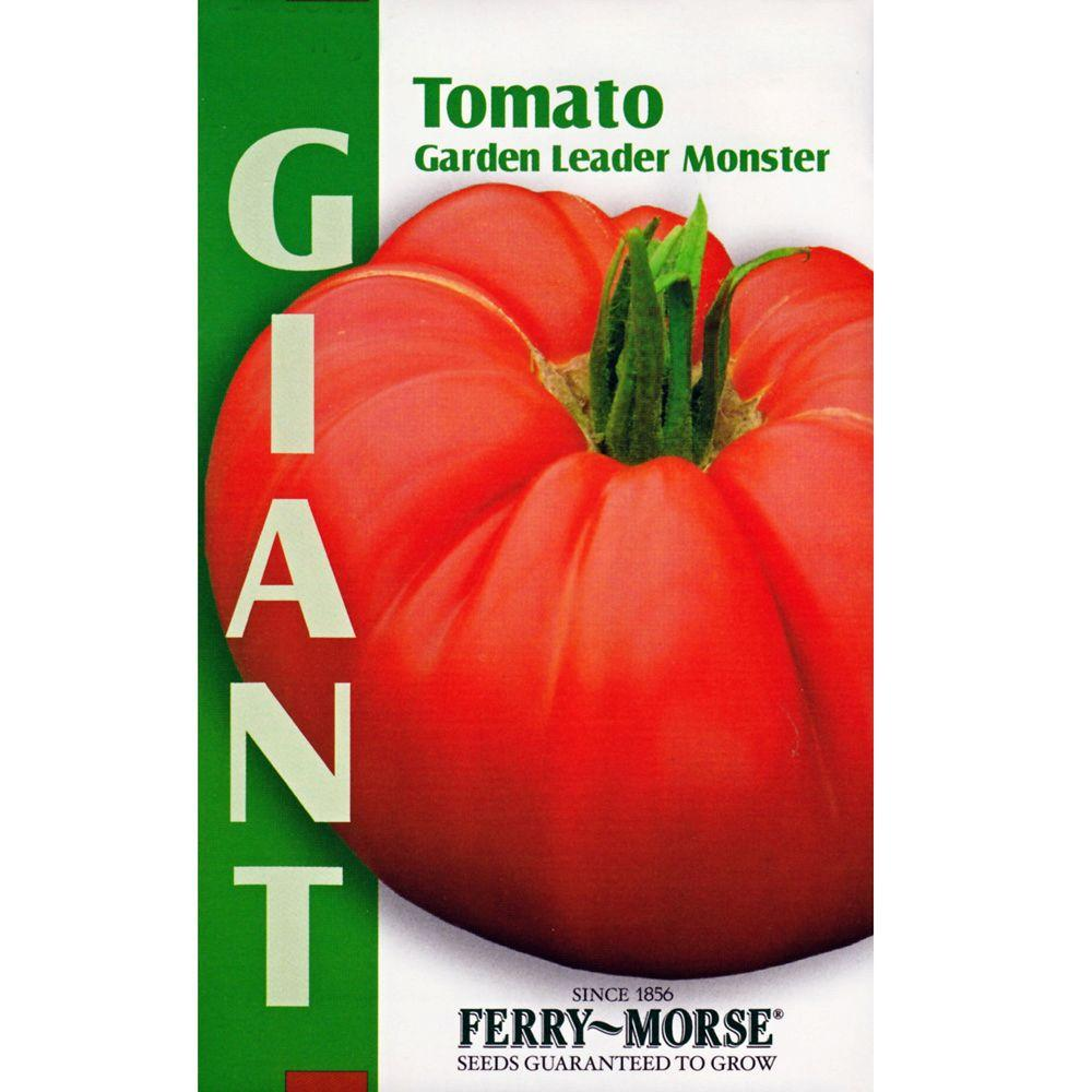 seeds plant vegetable itm peachy heirloom tomato garden rainbow fruit organic