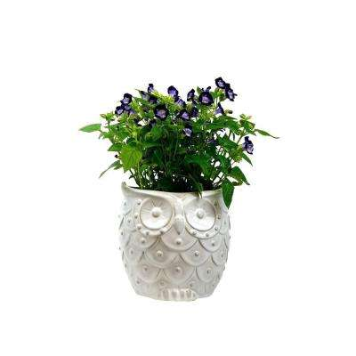 7.25 in. White Ceramic Owl Planter