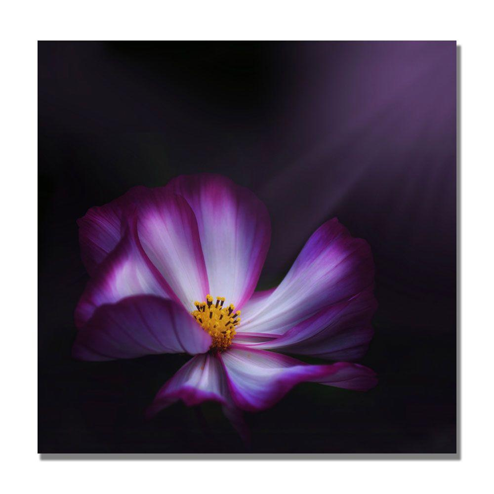 null 18 in. x 18 in. Cosmo Parade Canvas Art-DISCONTINUED