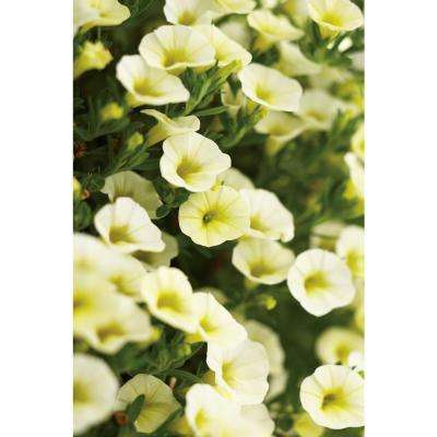 Superbells Yellow Chiffon (Calibrachoa) Live Plant, Yellow Flowers, 4.25 in. Grande, 4-pack