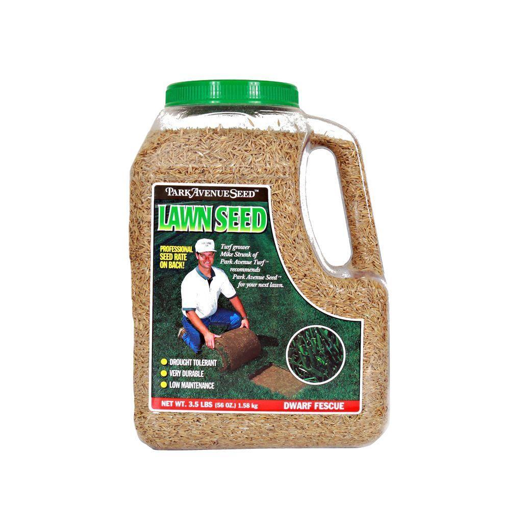 Park Avenue Turf 3.5 lb. Dwarf Fescue Lawn Seed