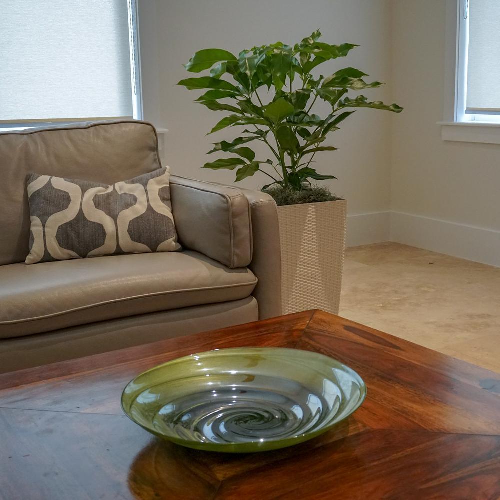 Schefflera Amate Plant in 9.25 in. Grower Pot