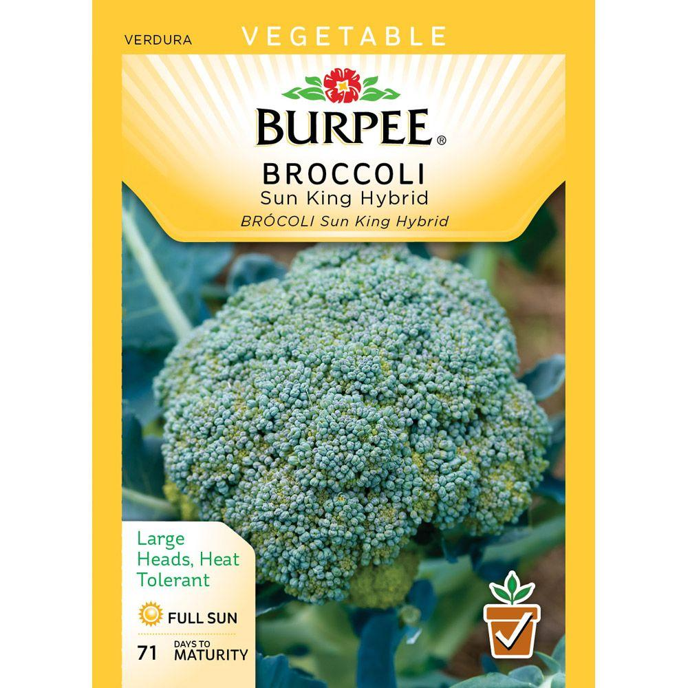 Burpee Broccoli Sun King Hybrid Seed