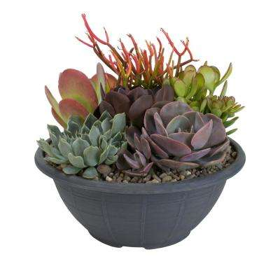 Succulent Garden Plant-Your-Own Kit