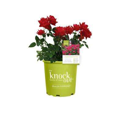 2 Gal. Double Rose Plant with Red Flowers (2-Pack)
