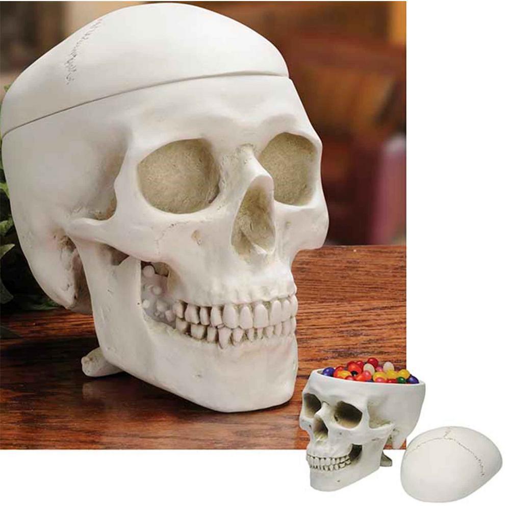 Museum White Resin Skull Box