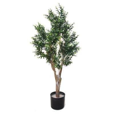 3.5 ft. Cypress Tree Ixora Chinese Tree