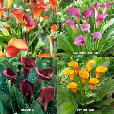 Calla Collection 4-Variety Bulbs (20-Pack)