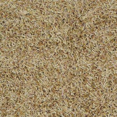 Carpet Sample - Royal Step - In Color Green Whisper 8 in. x 8 in.