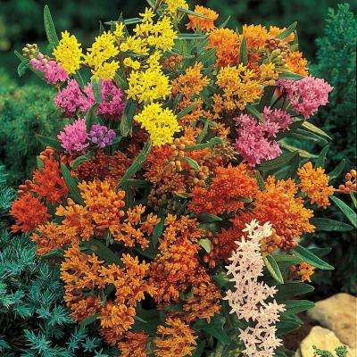 Butterfly Weed Asclepias Mixture, Live Bareroot Perennial Plants in Orange Flowers (5-Pack)