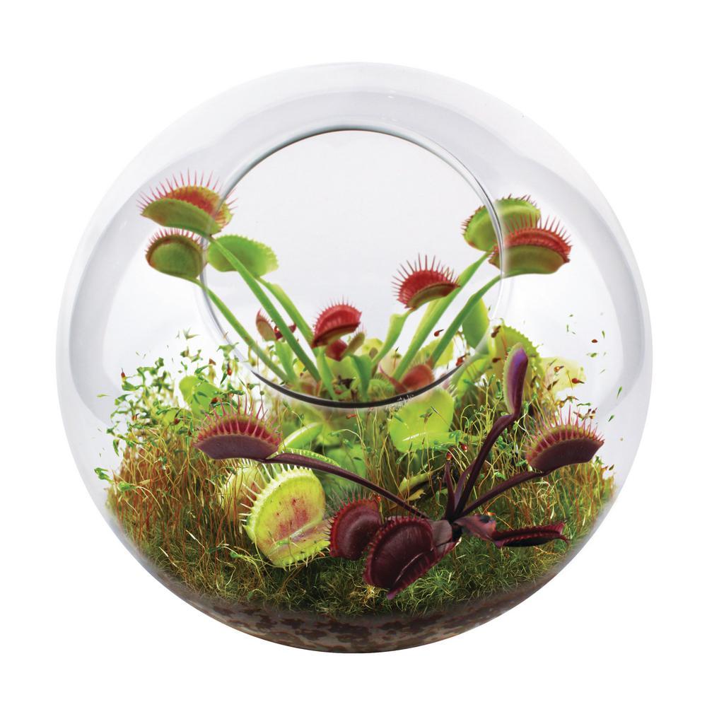 Classic Glass Flytrap Indoor Garden Terrarium Indoor Garden Seed Starter Kit