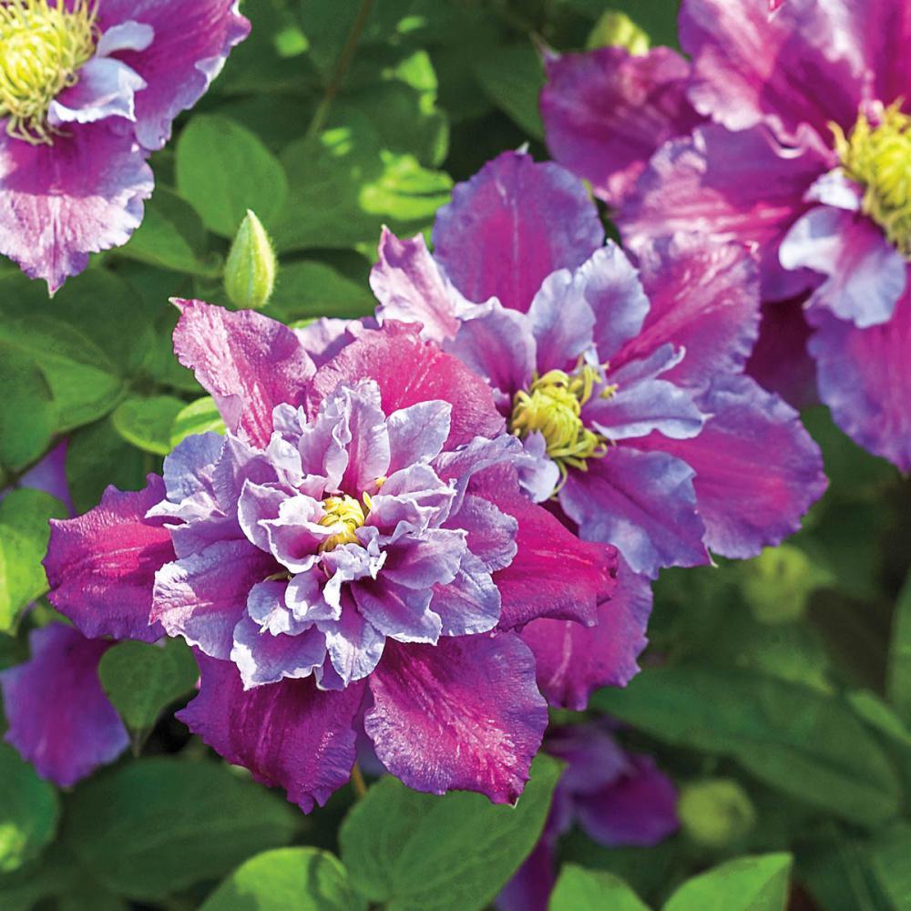 Full Sun - Recently Added - Garden Plants & Flowers - Garden Center