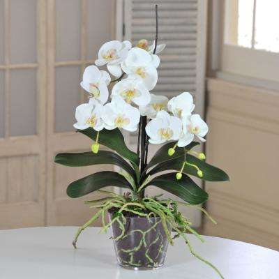 22 in. White Orchid Phalaenopsis in Glass