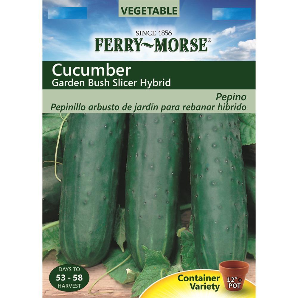 Cucumber Garden Bush Slicer Hybrid Seed