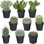 2.5 in. Cactus Collection (9-Pack)