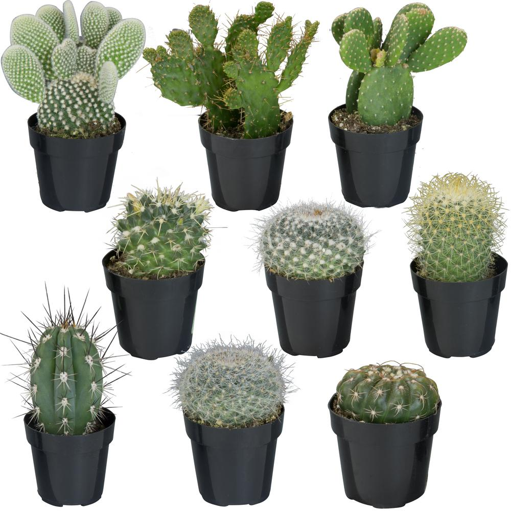 Altman Plants 2.5 in. Cactus Collection (9-Pack)