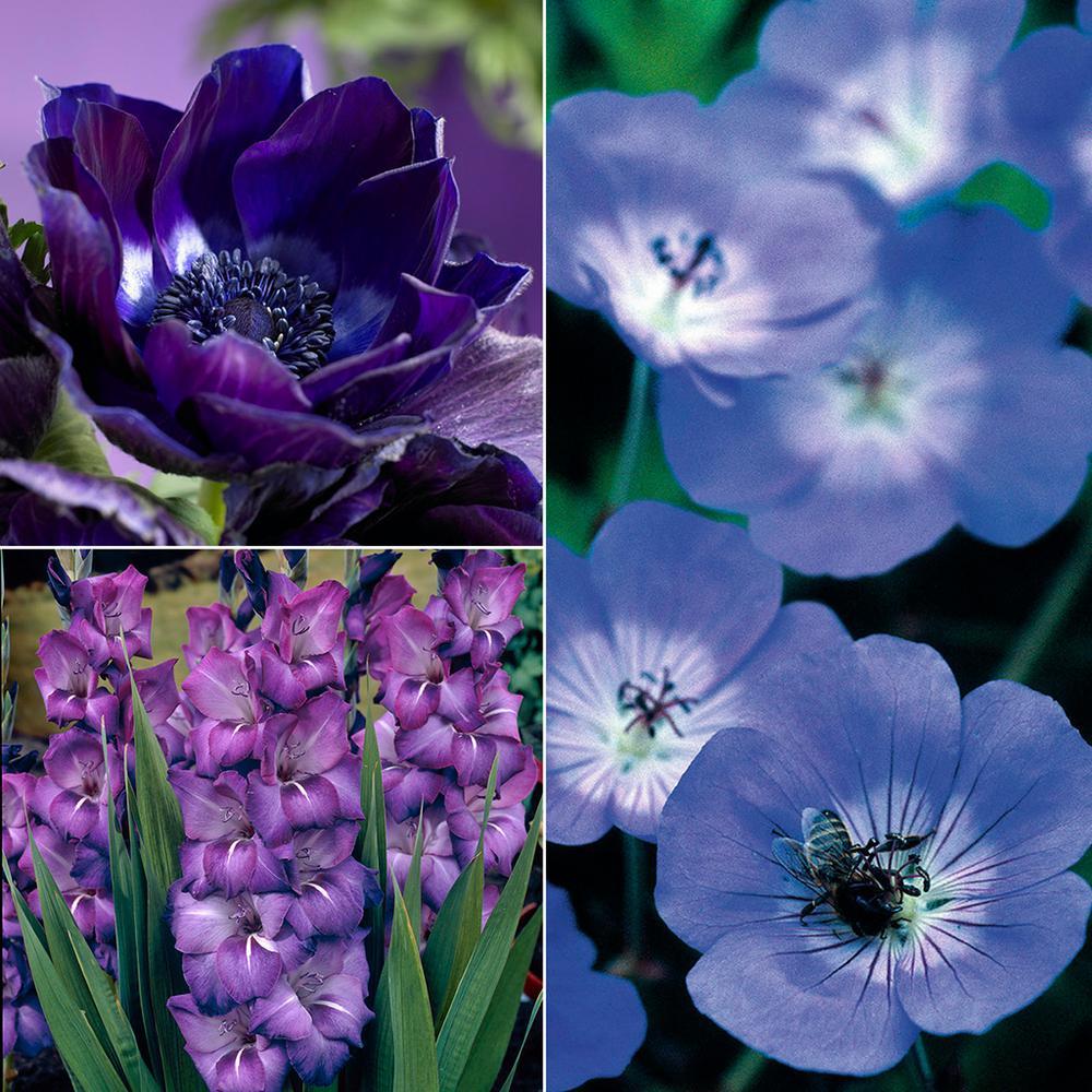 Spring blue flower bulbs garden plants flowers the home depot color your garden blue collection bulbs 38 set mightylinksfo