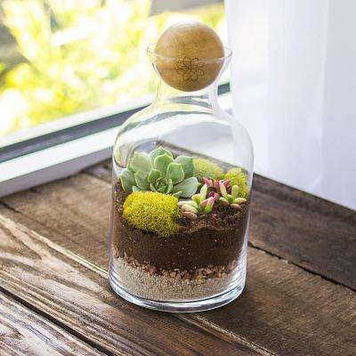 4-3/4 in. x 8-1/3 in. Clear Glass Terrarium