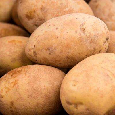 2 lbs. Potato Kennebec