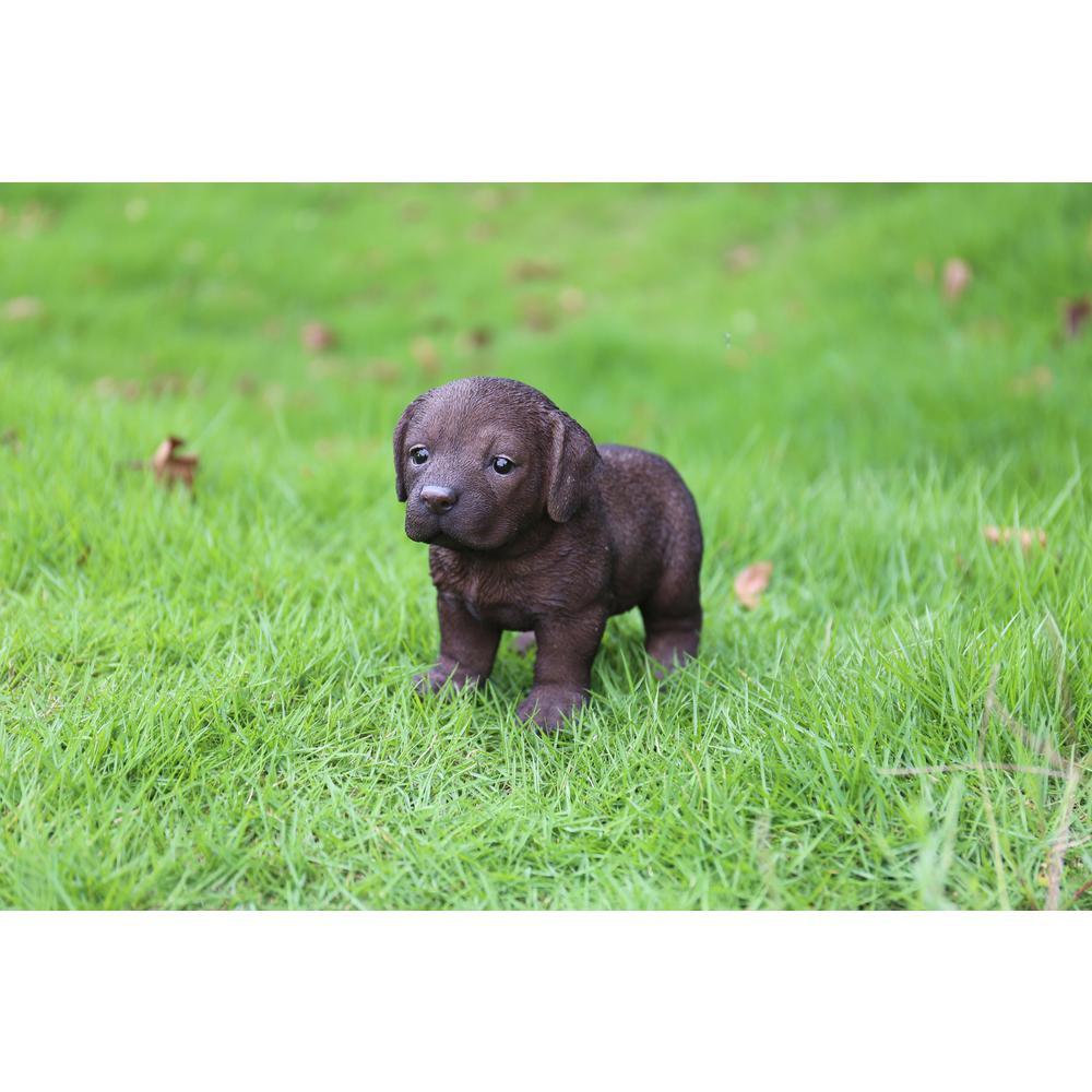 Chocolate Labrador Puppy Standing