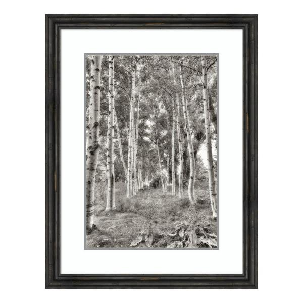 Amanti Art ''Birch Trees No.3'' by Alan Blaustein Framed Wall Art