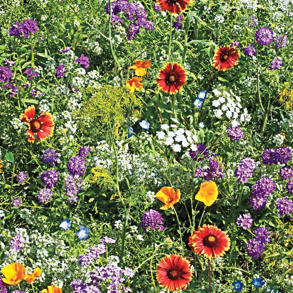 Gurney's Beneficial Bug Attractors Wildflower Seed Mixture (300 Seed Packet)