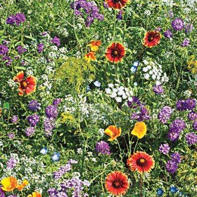 Beneficial Bug Attractors Wildflower Seed Mixture (300 Seed Packet)